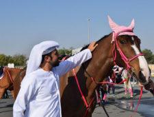 Pink caravan events 2018